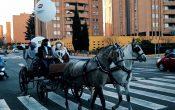 SS.MM. Los Reyes Magos visitan Parquesol (VÍDEO)
